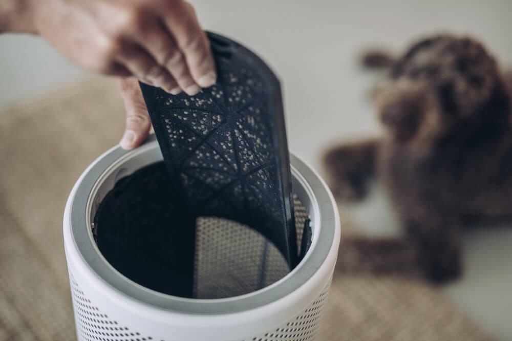 filtr węglowy w oczyszczaczu