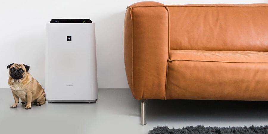oczyszczacz powietrza usuwający sierść zwierząt